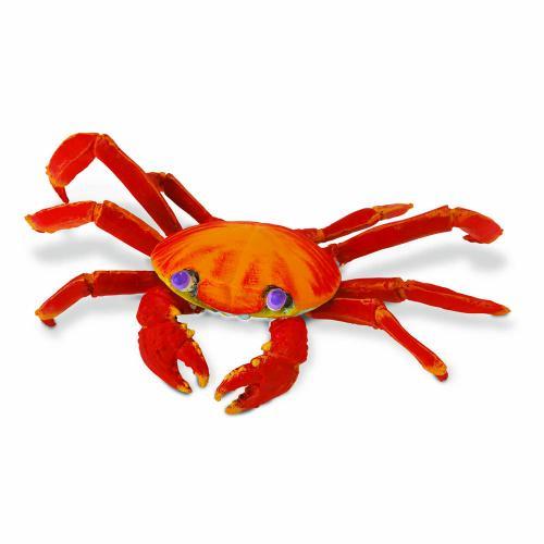 261729-incredible-creatures-galapagos-sally-lightfoot-crab-1