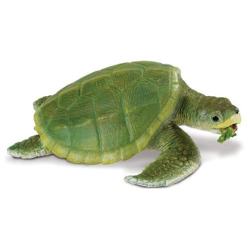 262429-safari-incredible-creatures-kemps-ridley-sea-turtle-1